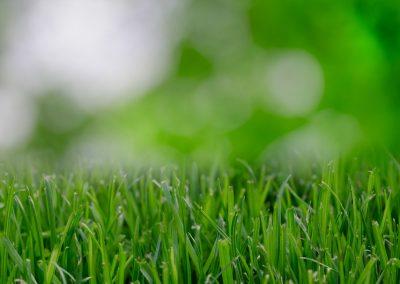 2791-nature-garden-grass